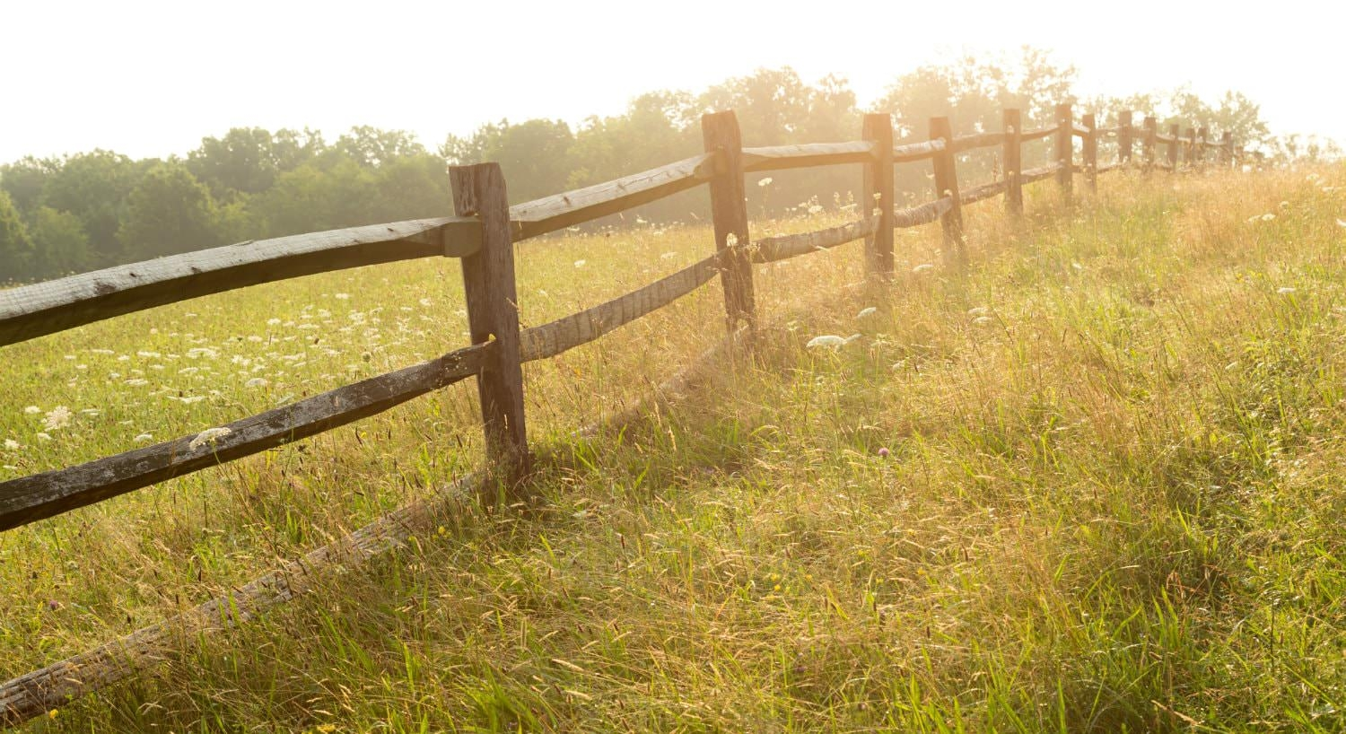 Close-up hazy view of brown slit-rail fence in a grassy meadow surrounded by green trees