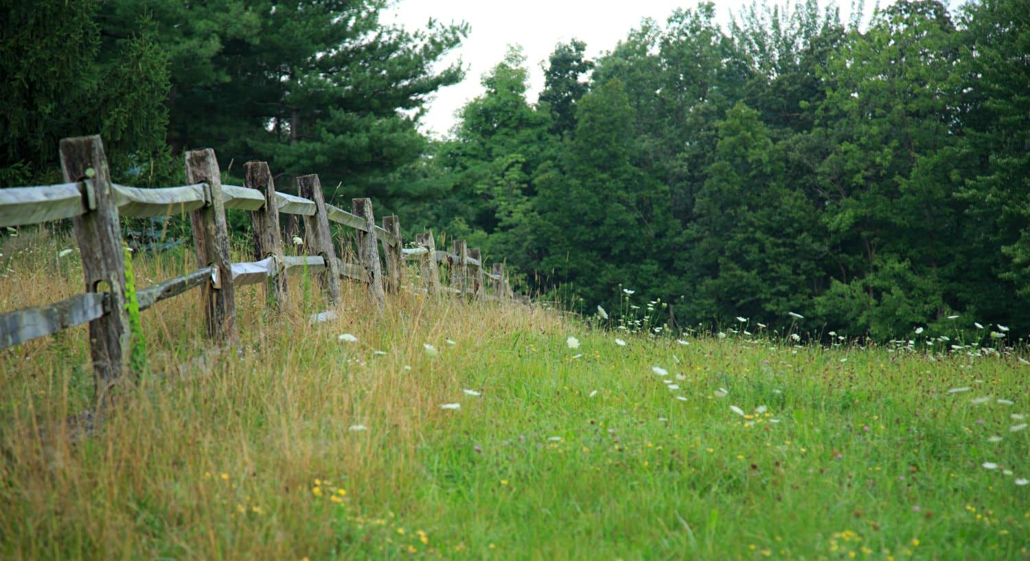 Grassy meadow with wildflowers and a split-rail fence surrounded by lush green trees