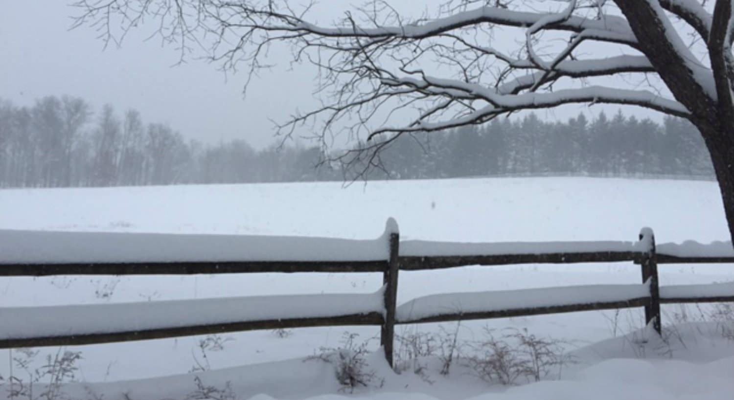 White snowy meadow with a snow-topped split-rail fence and snow-topped tree branches