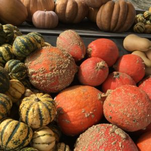 Pile of orange pumpkins and yellow and green gourds