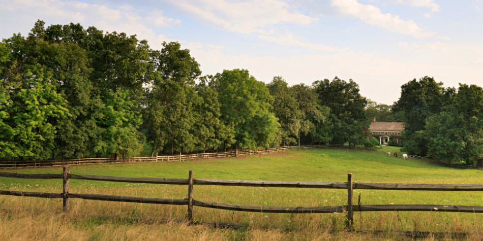 Exterior view of the front pasture with three horses surrounded by a split rail fence and green trees