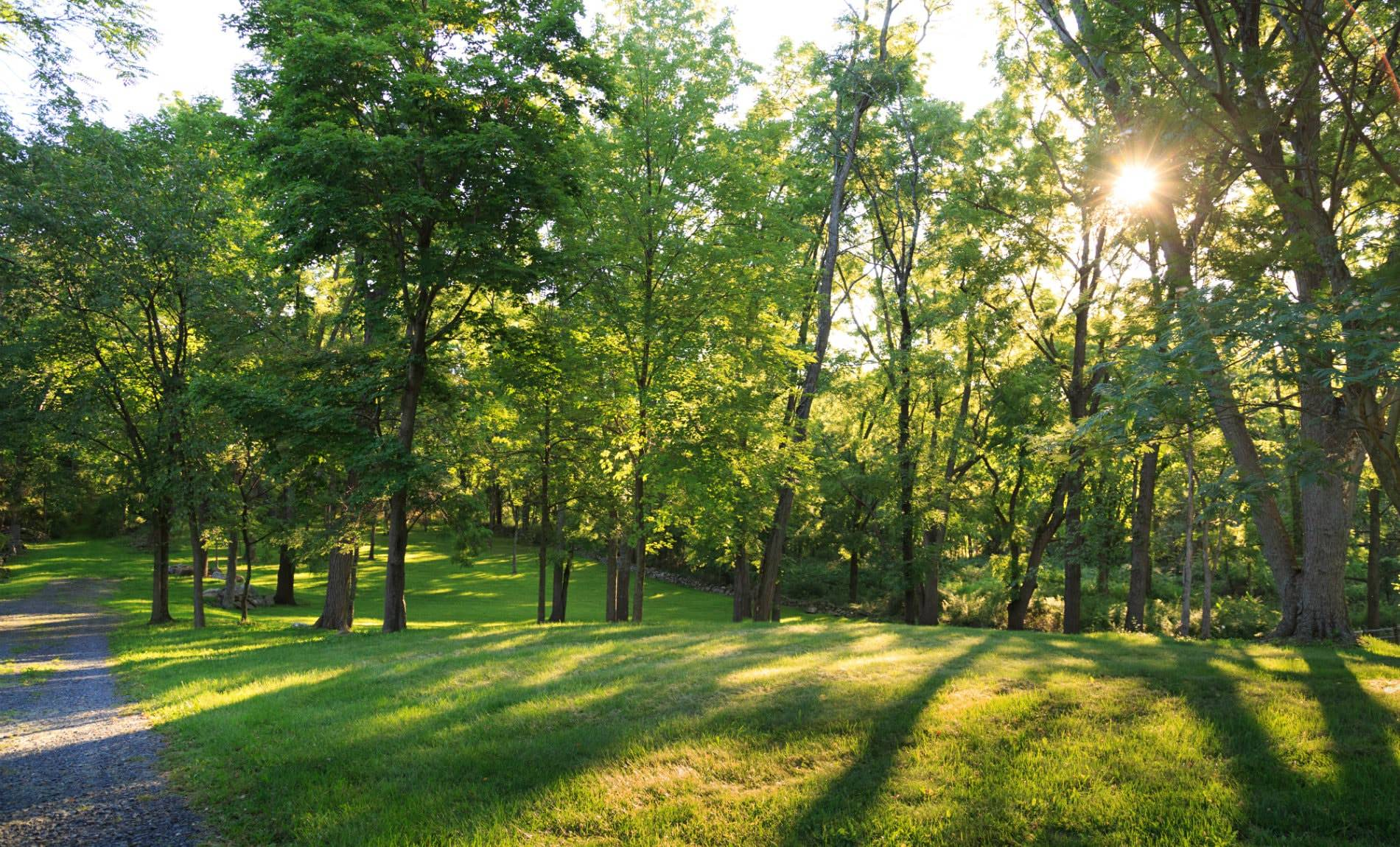 Dirt path alongside a grassy lawn surrounded by green trees with the sun peaking through