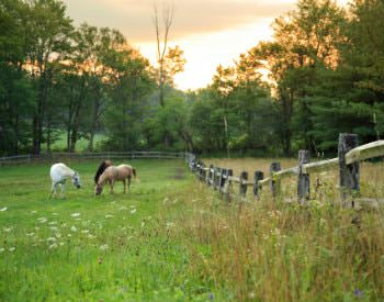 Green pasture with three horses surrounded by a split-rail fence and lush greenery