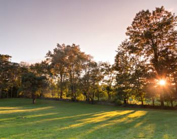 Large expanse of green grass with the setting sun peeking through a line of trees