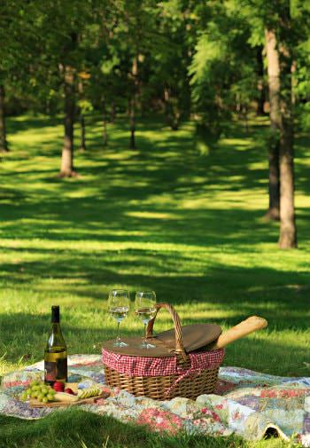 Colorful quilt topped with picnic basket, cheese and fruit, wine and glasses on a bed of grass surrounded by trees