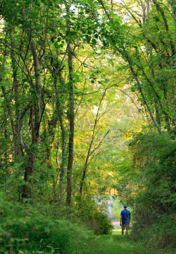 Man walking through a green grassy path through tall green trees