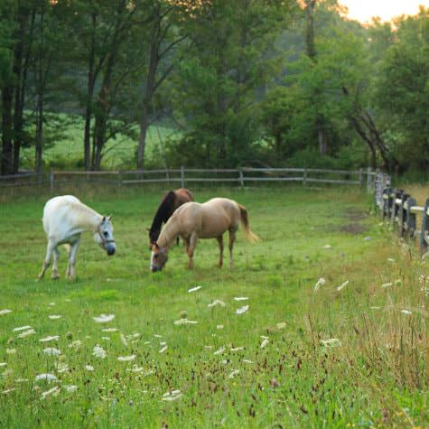 Three horses in a green pasture surrounded by a split-rail fence and trees